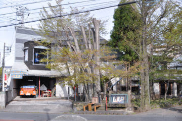 【街中の森(武蔵野の雑木林)】入間市市役所前:設計事務所のアトリエ(庭)の画像