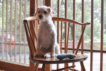 犬用のバリカンの画像