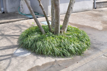 日々のメンテナンスから考える庭づくりの画像