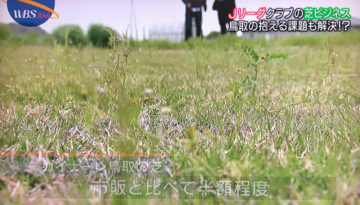 【ガイナーレ鳥取(サッカーJ3)の芝生事業】設計事務所の家づくり&庭づくりの画像