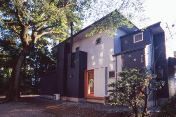 入間市西洋館の巨木に寄り添う家の画像