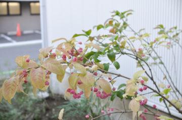 【マユミの木】入間市豊岡のテナントハウス『area-T-one』(埼玉の店舗デザイン)の画像