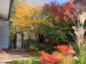 【我が家の庭の紅葉】埼玉の家づくり その後の画像