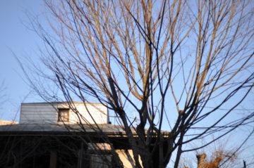 【奥武蔵の風景の残るアトリエ】埼玉の設計事務所 冬の風景の画像