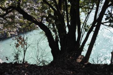 【青梅市釜の淵公園でお散歩】埼玉の家づくり その後の暮らしの画像