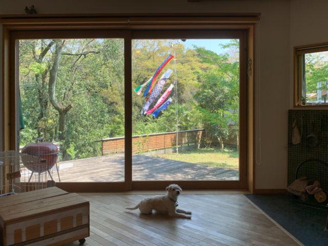 【庭に『鯉のぼり』を出しました】設計事務所の住宅デザイン(日高市)の画像