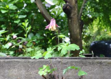 【うちで過ごそう!】庭で過ごしてわかること(日高市の家づくり)の画像