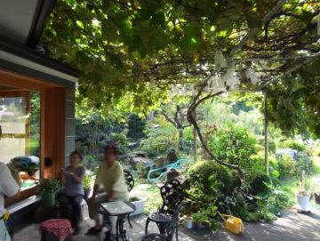 「ここは、ぶどう園?」リビング&玄関ポーチにステンレスの葡萄棚(入間市)の画像