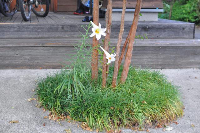 【『雑草』と『そうじゃない草花』の境界線】設計事務所の家づくりの画像