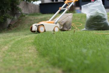 【建築設計事務所 アトリエ屋上庭園の芝刈り】2020/09/08の画像