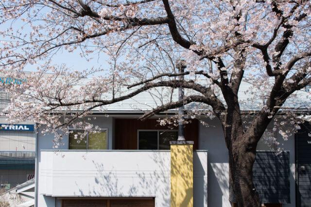庭先の桜(木造新築住宅の完成から6年目)入間市の画像