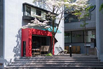 庭の緑の共有(設計事務所アトリエの環境)の画像